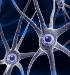 neuronas5b15d