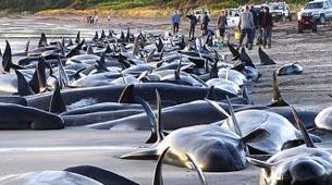 ballenasvaradas