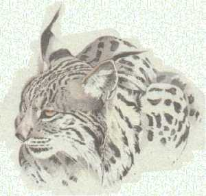 lince1ibe