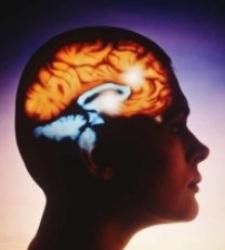 cerebro-12