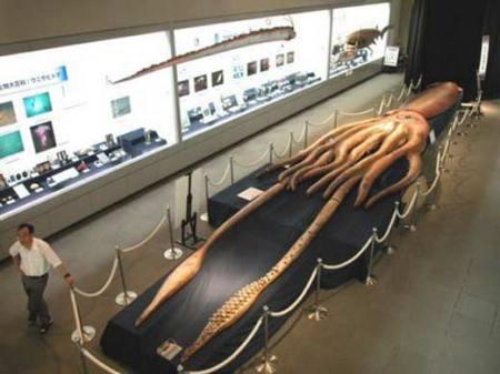Calamar-Gigante