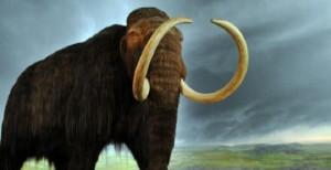 130602-mamut_cd7d5e43302194472eb9156b7f8c5a02