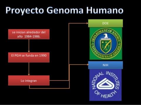proyecto-genoma-humano-3-638